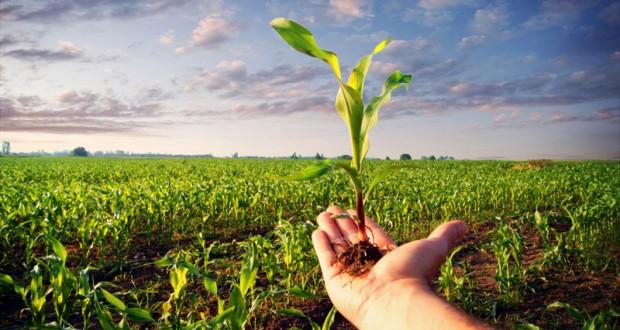 Caja rural del sur pone en marcha la app crsur agro adesva for Oficinas caja rural del sur